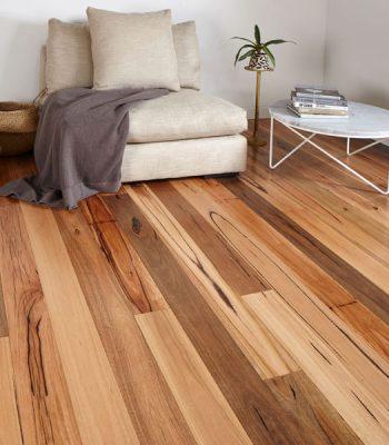 australian-chestnut